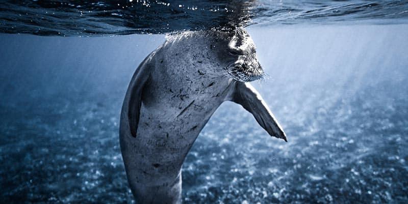animales acuaticos en peligro de extincion