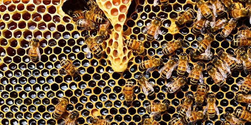 cera de abeja
