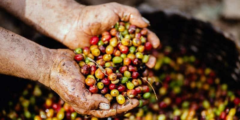 cafe ecologico